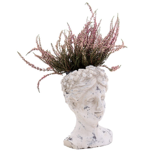 Flower Pot Musa - S