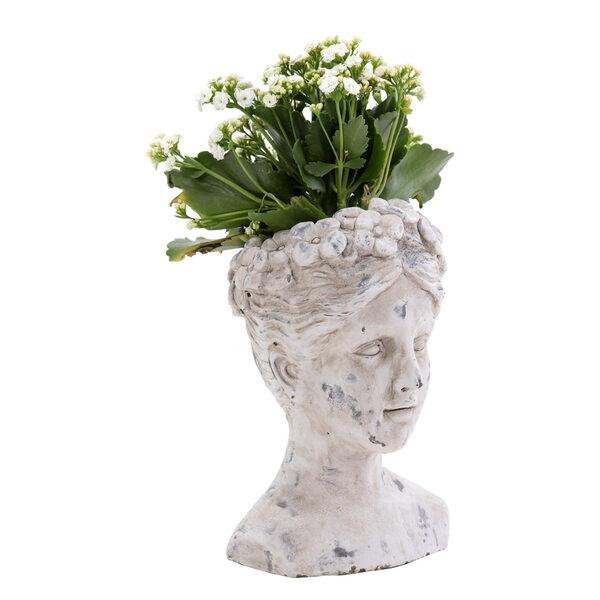 Flower Pot Musa - L